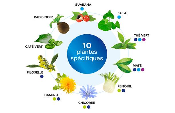Plantes 4321 Minceur