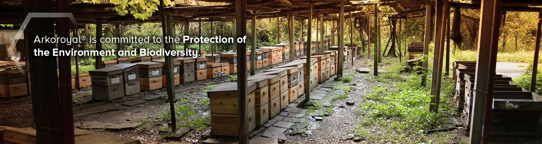 Preservation of the ecosystem around the hives